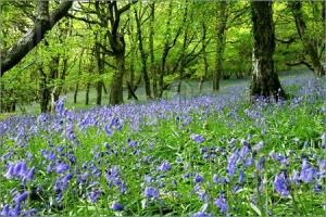 Bluebell-Fantasy-Land-105125